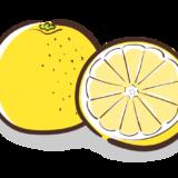 グレープフルーツのフリーイラスト素材