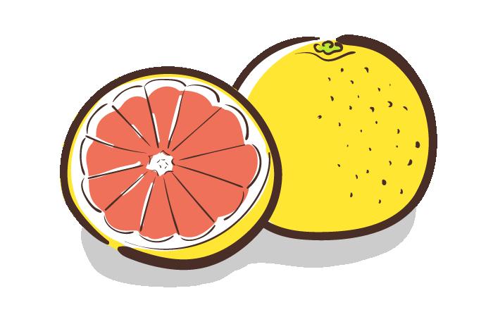 ピンクグレープフルーツのフリーイラスト素材